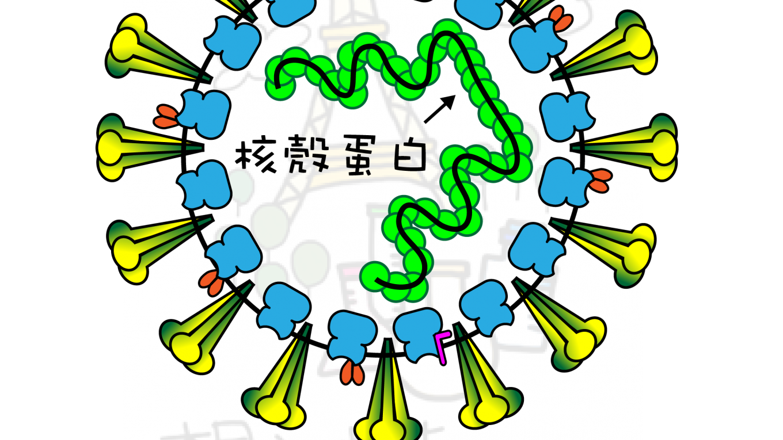 COVID-19] 科學文章筆記: SARS-CoV-2(新型冠狀病毒)可感染T淋巴球 ...
